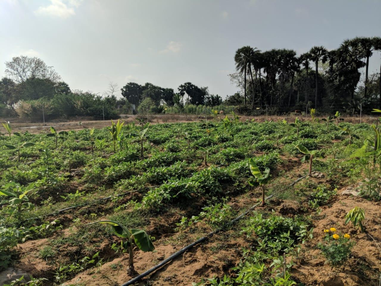 Natural Farm at Kanchipuram Good food Village
